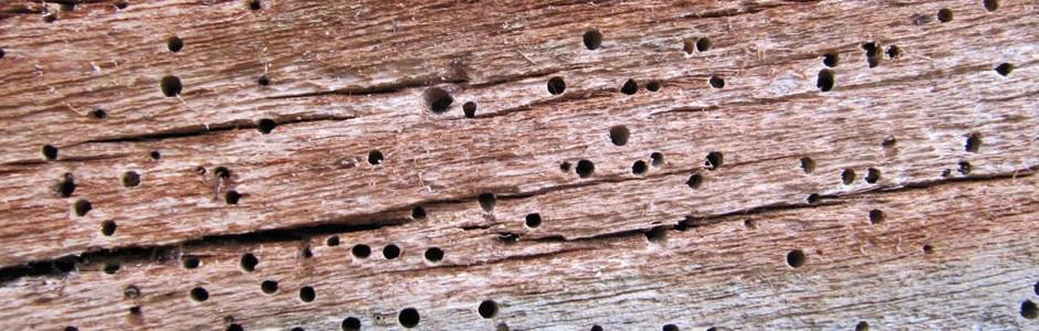 San Francisco termite control