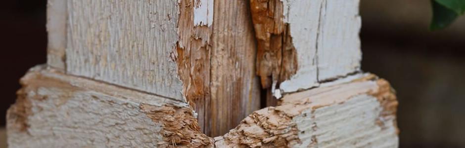 San Francisco termite damage